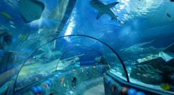 Gardaland Sea Life uno dei parchi Sea Life nel mondo