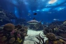 Oceanário de Lisboa uno dei migliori acquari e parchi marini del mondo
